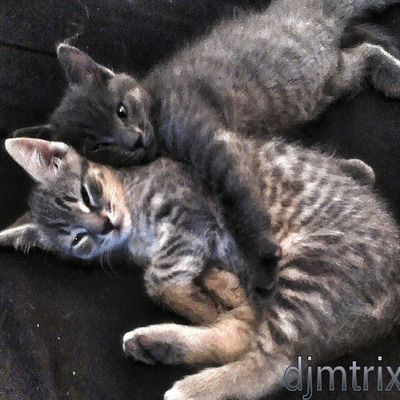 Brother and sister Kittens Animal Ig_fabpics Beautiful family naturecrazy naturelover nature rsa_nature_ baby cute