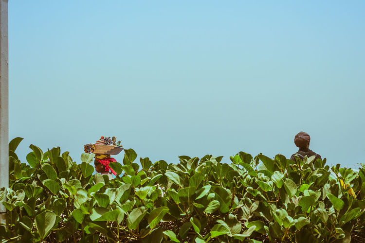 View over the hedge in Cape Verde Africa. Green Red Africa Blue Clear Sky Day Flower Growth Hedge Nature Outdoors People Plant Sky