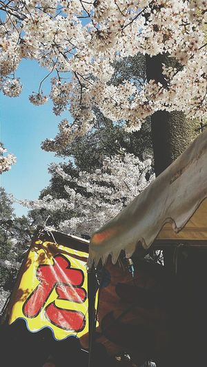 Food Stalls Food Fair Ueno Park Hanami Spring Tokyo Japan Travel Photography