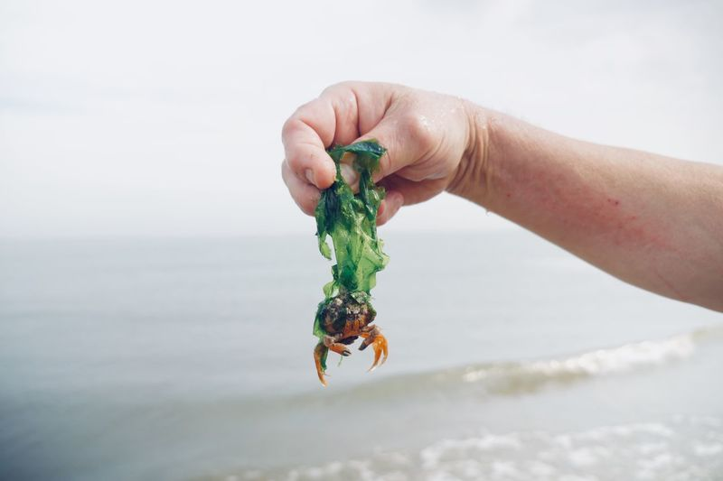 Cropped hand holding crab over sea against sky