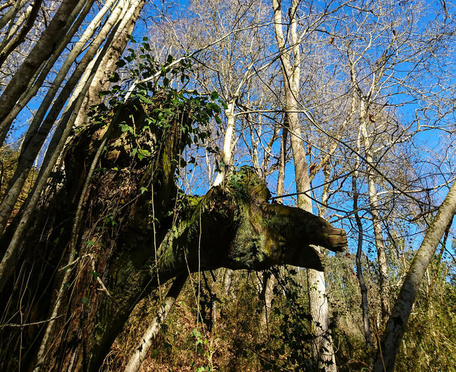 Ugly In Nature Asturies Asturias Landscape Tree Area Trees Wood Forest Bosque Winter Alf Low Angle View Day Full Frame Tree No People Nature Backgrounds Sunlight Outdoors Sky Beauty In Nature Close-up