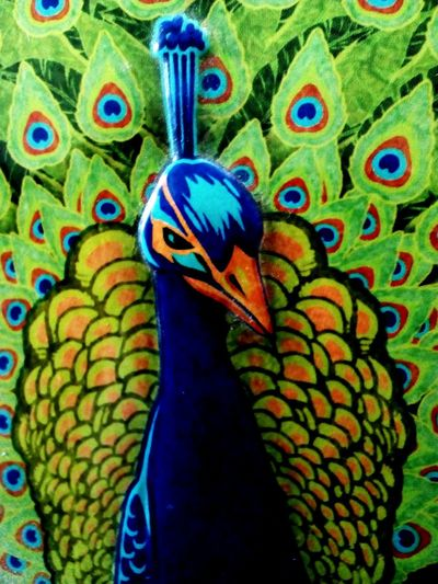 Bright Coloured Peacock Multi Colored No People Close-up Day Green Color