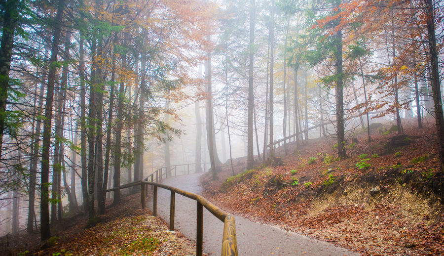 Autumn forest road, Fussen, Germany Tree Forest Plant Land Fog Nature Autumn Beauty In Nature Tranquility WoodLand Road Scenics - Nature No People Tranquil Scene Environment The Way Forward Non-urban Scene Day Direction Outdoors Change Pine Tree