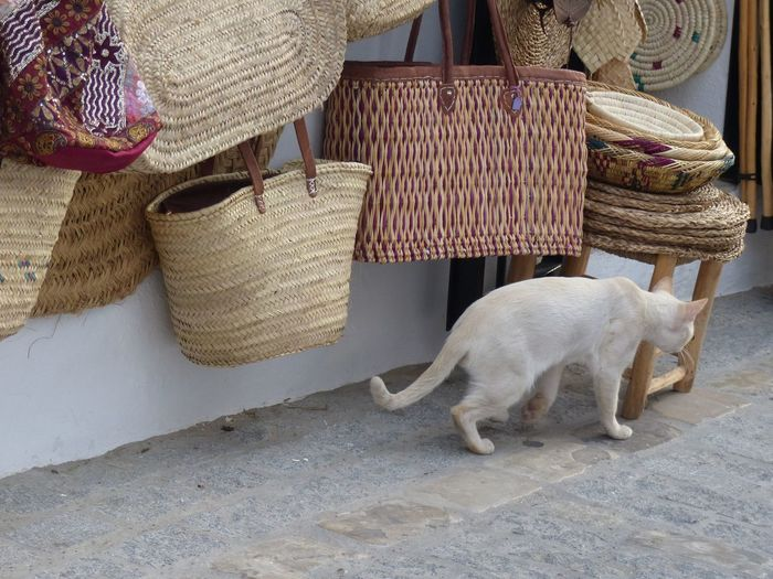 domestic animal white cat Andalusian corner spain ✈️🇪🇸 walking cat hanging baskets wicker baskets Wickerwork n Holiday Summertime Travel Destinations Walking Cat Cat Pet Spain♥ Andalusia Outside On The Street Andalusian Corner Spain ✈️🇪🇸 Hanging Baskets Wickerwork No People Wicker For Sale Shop