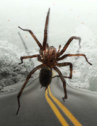 Wheelie,🕸🕸 Wheelie Spider Insect Invertebrate Spider Animal Themes One Animal Arachnid Animals In The Wild