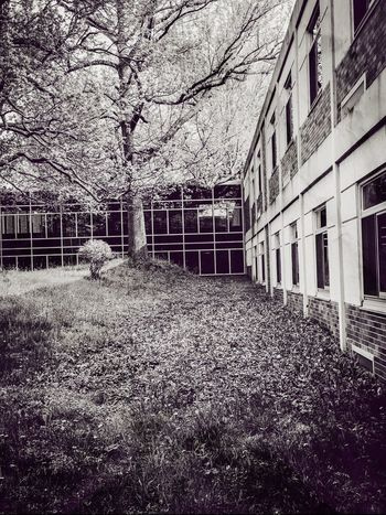 View 3 High School courtyard Built Structure Architecture Building Exterior Bare Tree No People Outdoors Day Tree Sky Nature IPhoneography Education First ! Exterior Design Windowwalkway Window View