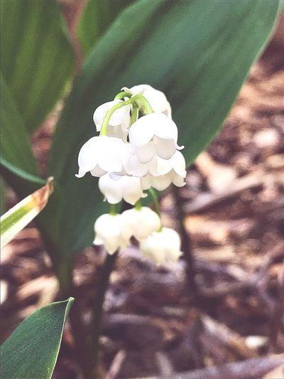 Heute im Garten. Today in the garden. 🌿🌹🌸🥀🌼🌻🌤️ Day Flower Head Flower Leaf Petal Close-up Plant