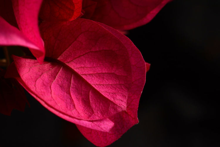 Botany Close-up Flower Flowerporn Flowers Fragility Nature Nature_collection New Life Red Softness Springtime