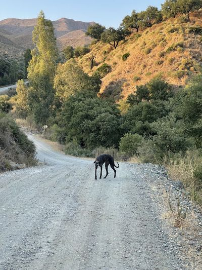 View of a horse on road