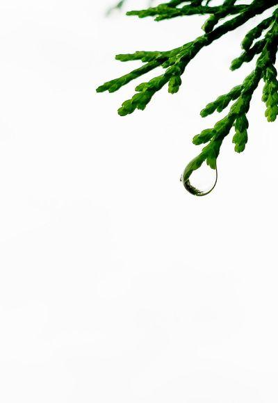 美丽👀 手机摄影 Plant Green Color