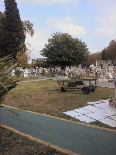 Cemetery Cemetery_shots Colors Nature Android Plants Autumn Buenos Aires, Argentina  TheWeekOnEyeEM Relaxing