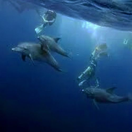 Uder the surface with delphins See Delphins Scubadiving Instatravel naturewild