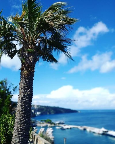 View. Visitsorrento Views Panorama Naturephoto Naturegram Naturephotography Terrace Sorrentocoast Photographers Travelphotography Travelph Traveling Traveldestination Destinations Travelling EyeEmNewHere Tree Palm Tree Sea Water Blue Tree Trunk Beach Sunny Sky Horizon Over Water Tropical Tree
