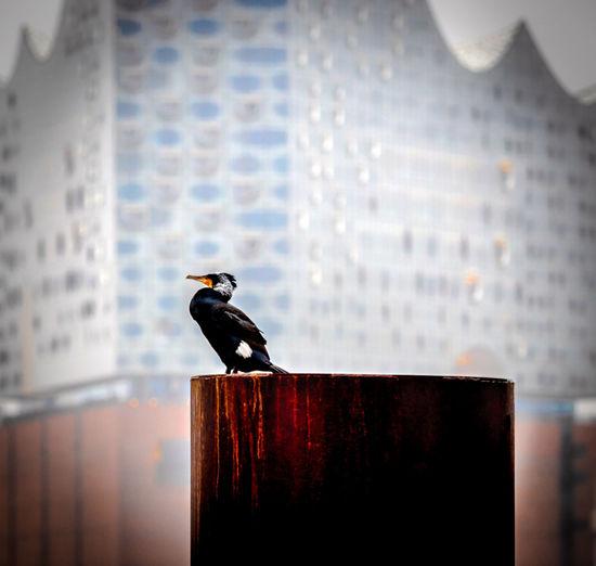 Wasservogel vor
