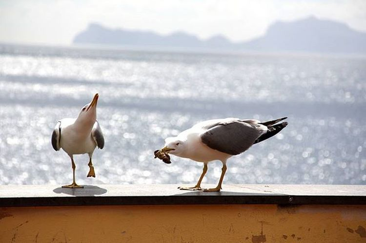 Gabbiani Seagulls Mare Capri Napoli Due Riflessi Reflection Pulebardha Zog Birds Uccelli Two Is Better Than One