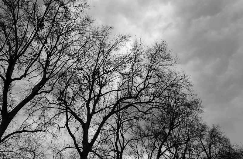 EyeEm Best Shots Eye4photography  EyeEm Best Pics EyeEm Bnw Blackandwhite Black And White Black & White Blackandwhite Photography Monochrome Tree Sky Low Angle View Cloud - Sky Bare Tree Branch Nature Tranquility Beauty In Nature Silhouette Non-urban Scene Overcast Tree Canopy  Outdoors Scenics - Nature