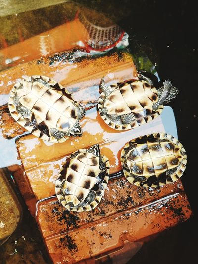 Sleeping Pet Close-up Seashell Animal Shell
