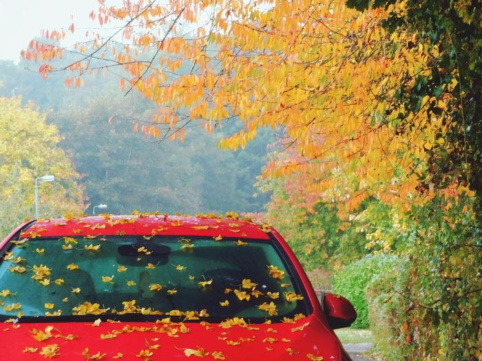 Autumn Car Red