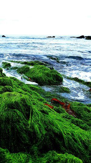 Ocean green Ocean Plants Rocks