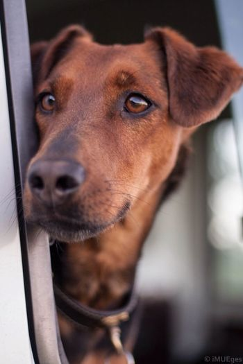 Instinkt Instinct Dog Jagd