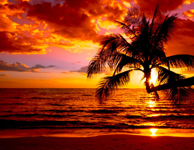 Silhouette palm tree by sea against sunset sky