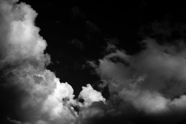 Solo Bird Cloud - Sky Sky Beauty In Nature Low Angle View Tranquility No People Nature Scenics - Nature Tranquil Scene White Color Cloudscape Fluffy
