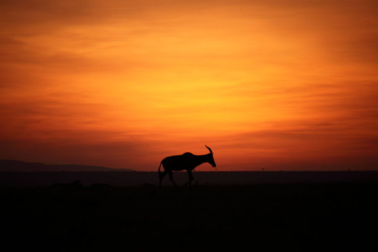 Silhouette horse on landscape against orange sky