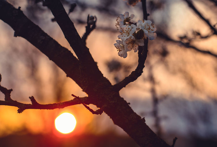 Branch Tree Plant Focus On Foreground Nature Sunset No People Beauty In Nature Close-up Sky Outdoors Tranquility Sunlight Growth Orange Color Day Twig Selective Focus Fragility Sun Dead Plant