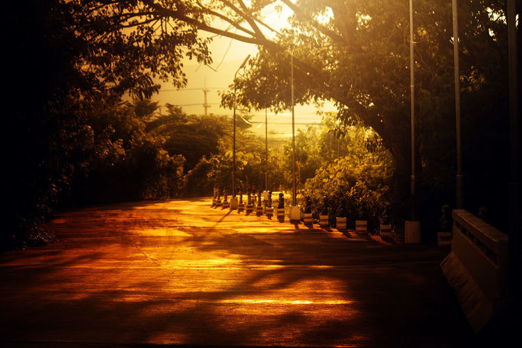 City Dark Direction Footpath Growth Nature No People Outdoors Park Plant Road Shadow Street Sunlight Sunset The Way Forward Tranquility Transportation Tree Treelined