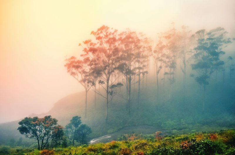 Tree Fog Nature