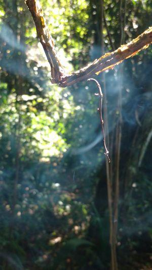 Tree Hanging Close-up Plant Animal Themes