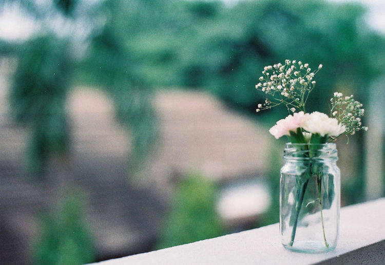 Close-up of flowers in vase on window sill