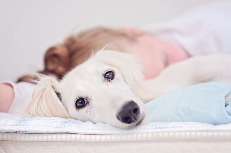 Close-up portrait of dog lying down on bed