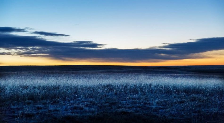 Blue Morning frost Colorado Nature Tranquil Scene Beauty In Nature Sunset Field Scenics Tranquility Landscape Sky No People Outdoors Growth Idyllic Rural Scene Cloud - Sky Horizon Over Land Agriculture Grass Day EyeEmNewHere