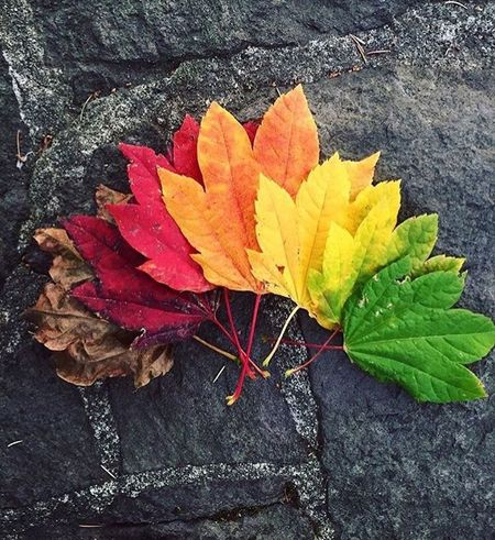 A little taste of fall 🍁 how cool is this! 👌🏻 Leaf Autumn Close-up Change Season  Yellow Dry Stem Vibrant Color Damaged Deterioration Fragility Nature Selective Focus Maple Leaf Outdoors Day Weathered Concrete Botany