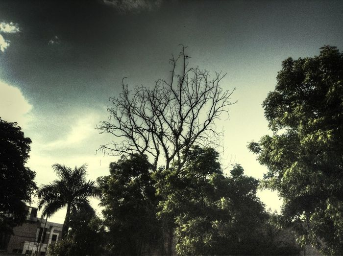 Goosebumps. Hdr_Collection HDR Nature Trees