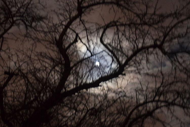 new moon Moon