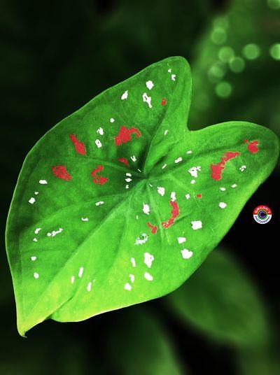 Leaf Green Leaf Green Leaf, Fresh And Beautiful Enjoying Nature The Beauty Of Nature Leafporn Leaf 🍂 EyeEm Nature Lover Beautiful Nature Nature_perfection