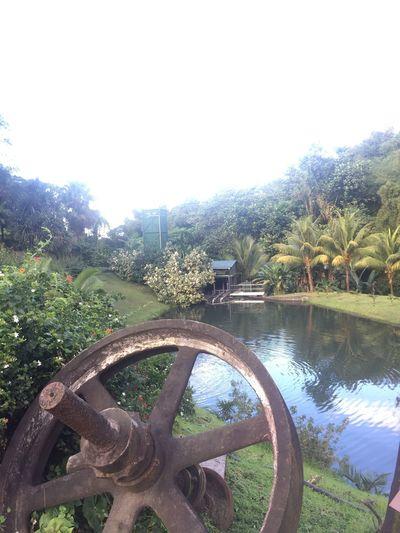 Ruhm RuhmJm Jardins Martinique Picoftheday