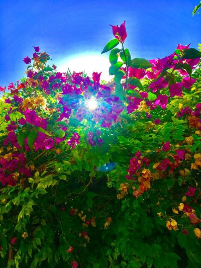Plant Growth Beauty In Nature Nature Low Angle View Tree Sky Green Color Fragility Vulnerability  Flower Leaf Plant Part No People Flowering Plant Day Outdoors Multi Colored Sunlight Freshness