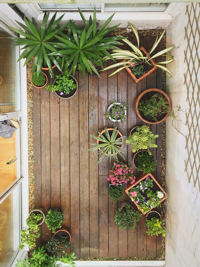 Aerial view of various plants on porch