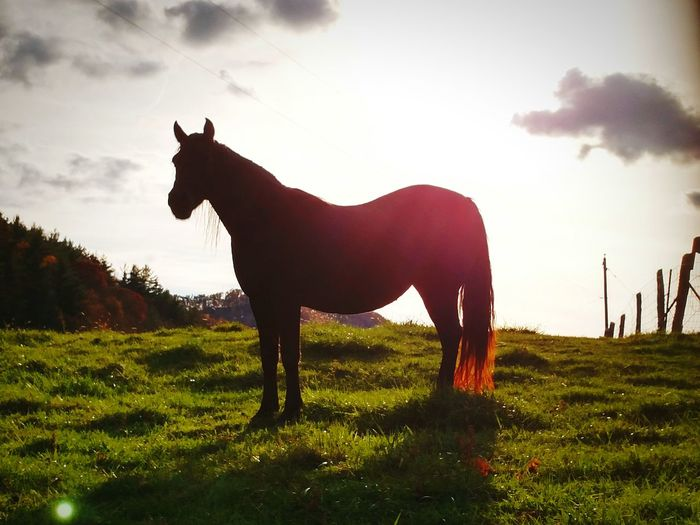 Horse Silhouette Light And Shadow EyeEm Nature Lover Animals Posing Amazingpics Beautiful Nature Mobilephotography Westvirginia Greatlight Farm Animals Farmland