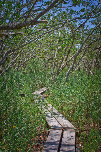 Marsh footpath Florida Nature Grass Green Color Growth Marshland  Nature No People Pine Island Conservation Are Tranquil Scene Tranquility Tree Wooden Walkway