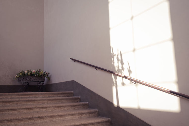 Potted plant on staircase against wall in building