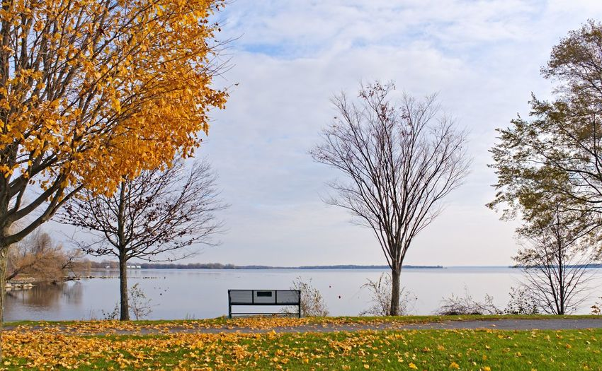 Bench along the Belleville shoreline Tree Plant Nature Sky Autumn Change Beauty In Nature Day Field Growth Water No People Lake Outdoors Land Branch Tranquility Yellow Trunk Fall Park Bench Bench Shore Shoreline Cold Morning