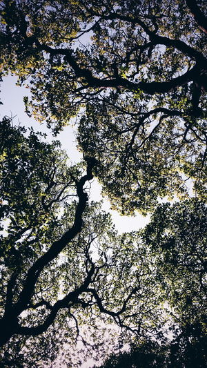 Showcase April Tones Things I Like Trees Trees And Sky