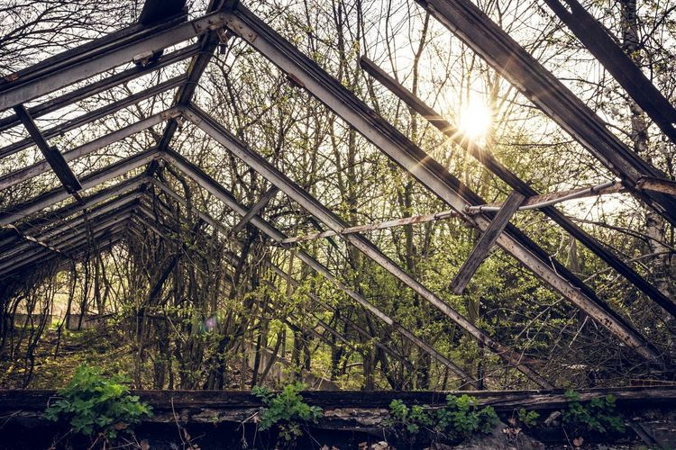 Natur Green Plants Garden Overgrown Plant Sunlight Low Angle View Tree No People Nature Day Growth Pattern Architecture Built Structure Outdoors Metal Sun Sunbeam