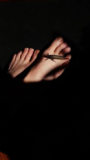 grasshopper on my skin Foot Feet Light And Shadow Woman Portrait Personal Perspective Insect Insect Photography Grasshopper Pleading Black Background Studio Shot Shadow Forgiveness Close-up Finger Human Finger Body Part