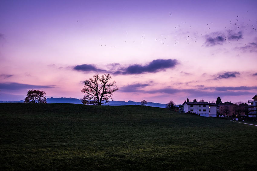 Sky Cloud - Sky Environment Plant Beauty In Nature Field Landscape Scenics - Nature Nature Building Exterior Sunset Tree Land Architecture Tranquil Scene Built Structure Tranquility Dusk Grass No People Outdoors Purple