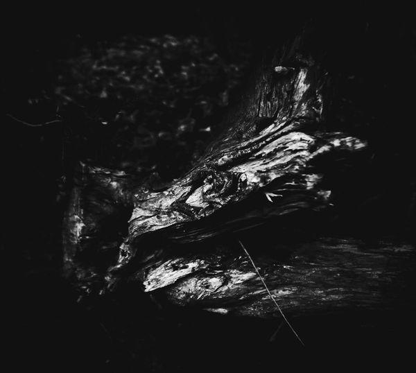 Peace Of Wood Nature Silence Blackandwhite Hope Peance Beautiful Deep